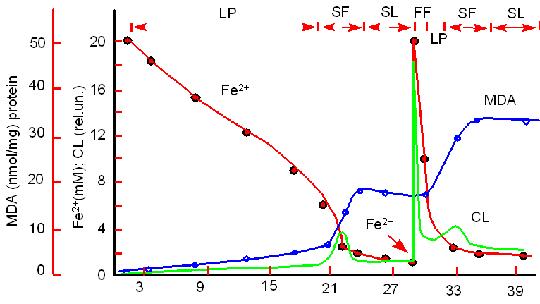 Кинетика окисления ионов Fe2+,