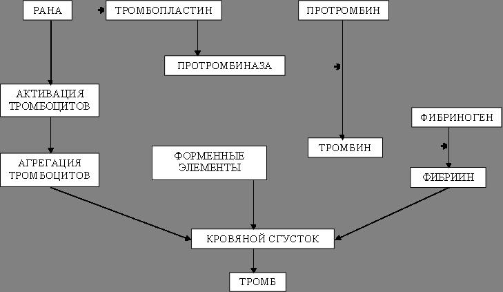 РАНА,АКТИВАЦИЯ ТРОМБОЦИТОВ,АГРЕГАЦИЯ ТРОМБОЦИТОВ,ФОРМЕННЫЕ ЭЛЕМЕНТЫ КРОВИ,ТРОМБОПЛАСТИНН,ПРОТРОМБИНАЗА,ПРОТРОМБИН,ТРОМБИН,ФИБРИНОГЕН,ФИБРИИН,КРОВЯНОЙ СГУСТОК,ТРОМБ