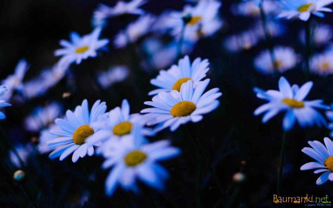 Цветы фото ночью