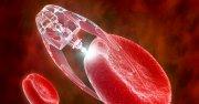 Нанороботы против рака и другие новости науки и техники 6 недели 2018